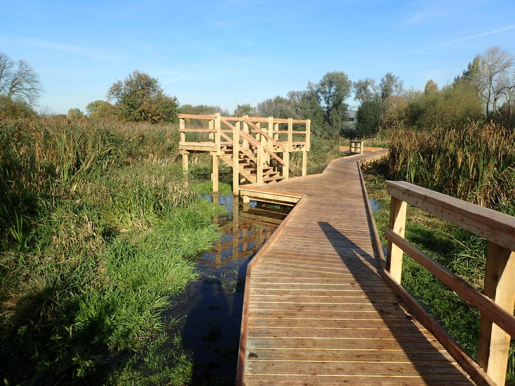 01 morden hall park 250m oak and larch boardwalk nature walk with viewing platforms national trust property