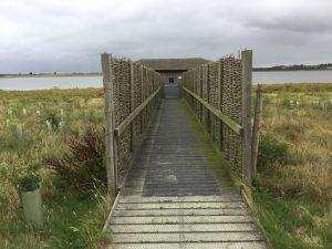 12 abberton reservoir site revisit