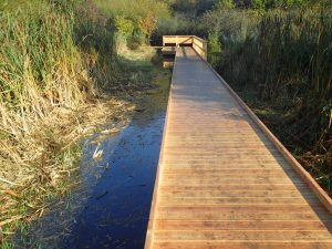 15 morden hall park 250m oak and larch boardwalk nature walk with viewing platforms national trust property
