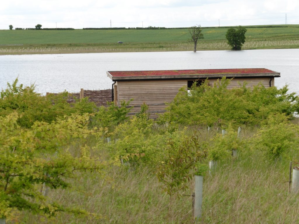 Back view hide bay bird hide with sedum roof at abberton reservoir for essex wildlife trust
