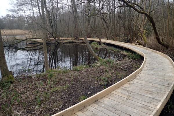Boardwalk leading to pond dipping platfrom by wild deck company