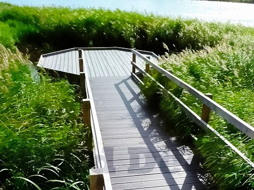 hexagonal-pond-dipping-platform-with-walkway-by-the-wild-deck-company