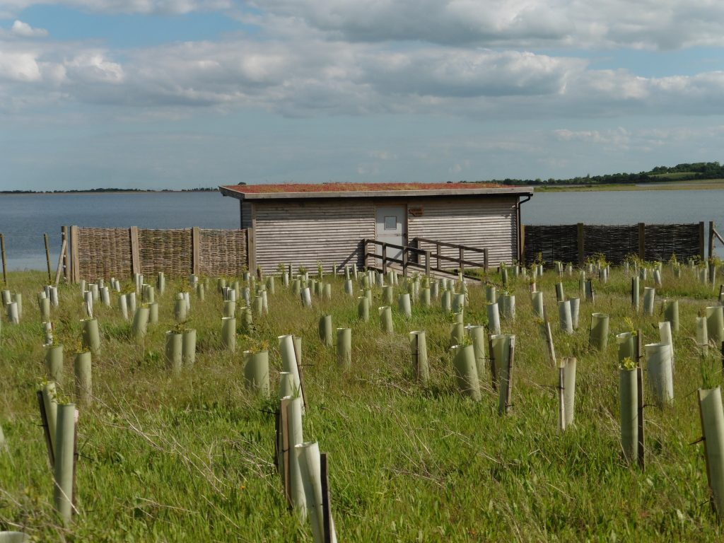 Rear view with planting gwens hide bird hide for essex wildlife trust at abberton reservoir