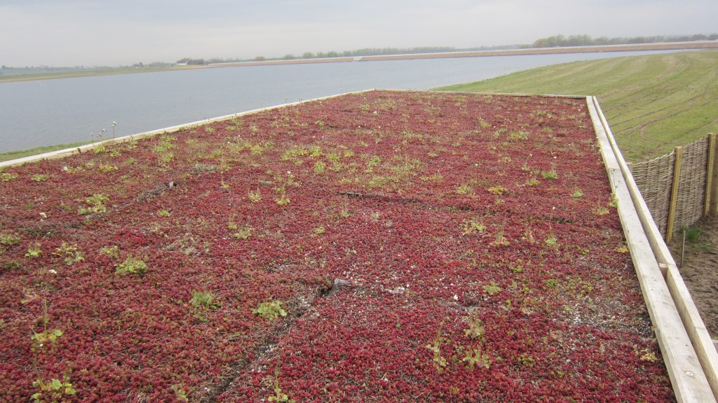 Sedum roof gwens hide bird hide for essex wildlife trust at abberton reservoir