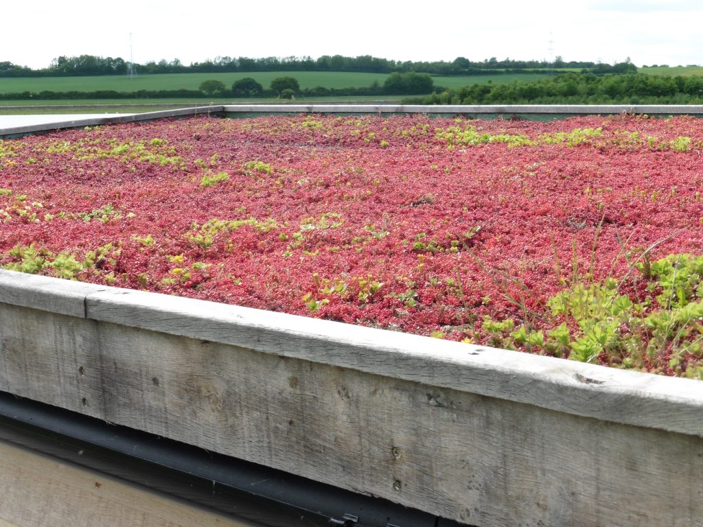 Sedum roof hide bay bird hide with sedum roof at abberton reservoir for essex wildlife trust