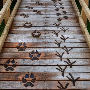 Wooden Boardwalk with Animal Prints