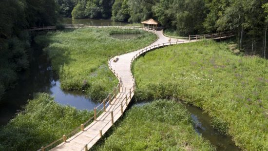 bridge kew wakehurst oak wetland boardwalk