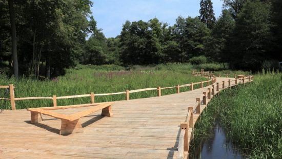 kew wakehurst oak wetland boardwalk