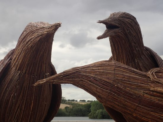 three chatty starlings rushden lakes sculptures