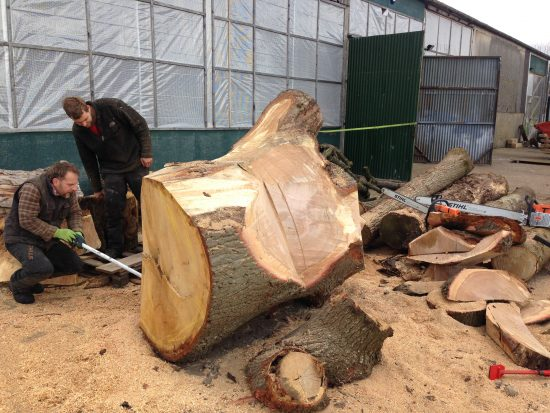 tree truck carving
