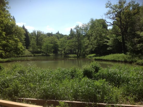 view kew wakehurst oak boardwalk wip